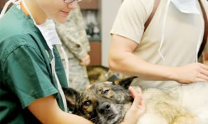 online animal care courses ireland